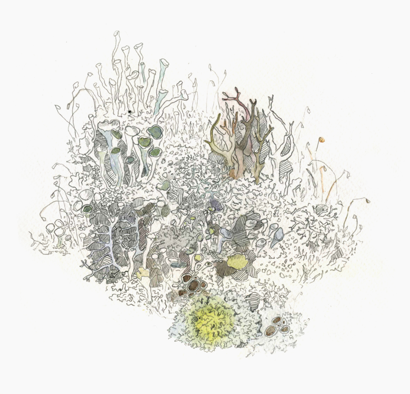 Moss 25-25cm, paper, aquarelle, pencil, Yalanzhi Yulia